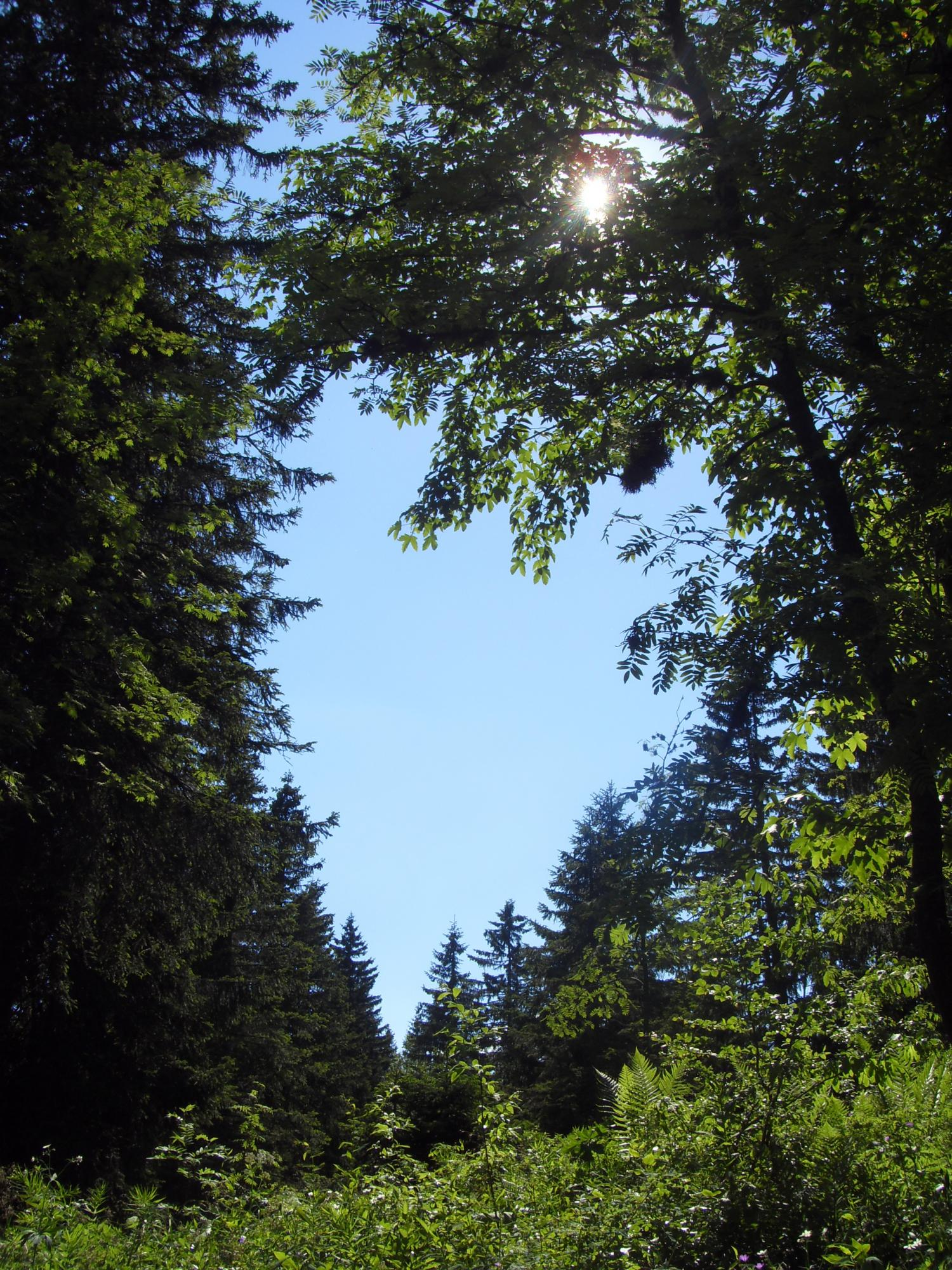 WEEK-END PLANTES SAUVAGES COMESTIBLES